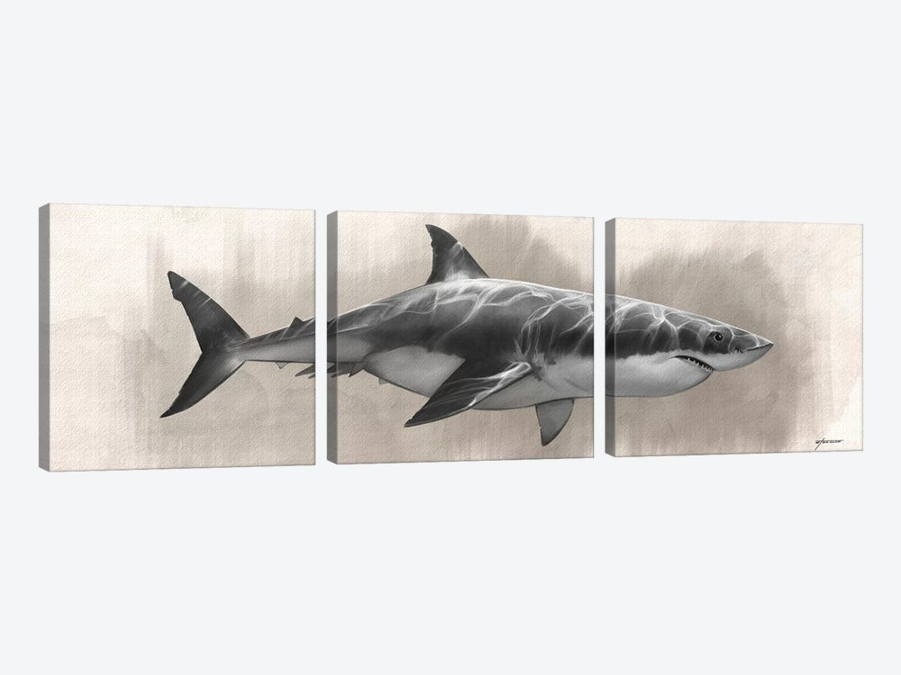 Great White Shark Drawing by Steve Goad 3-piece Canvas Art