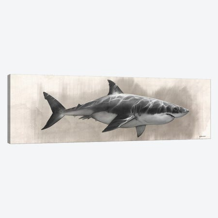 Great White Shark Drawing Canvas Print #GOA56} by Steve Goad Canvas Wall Art