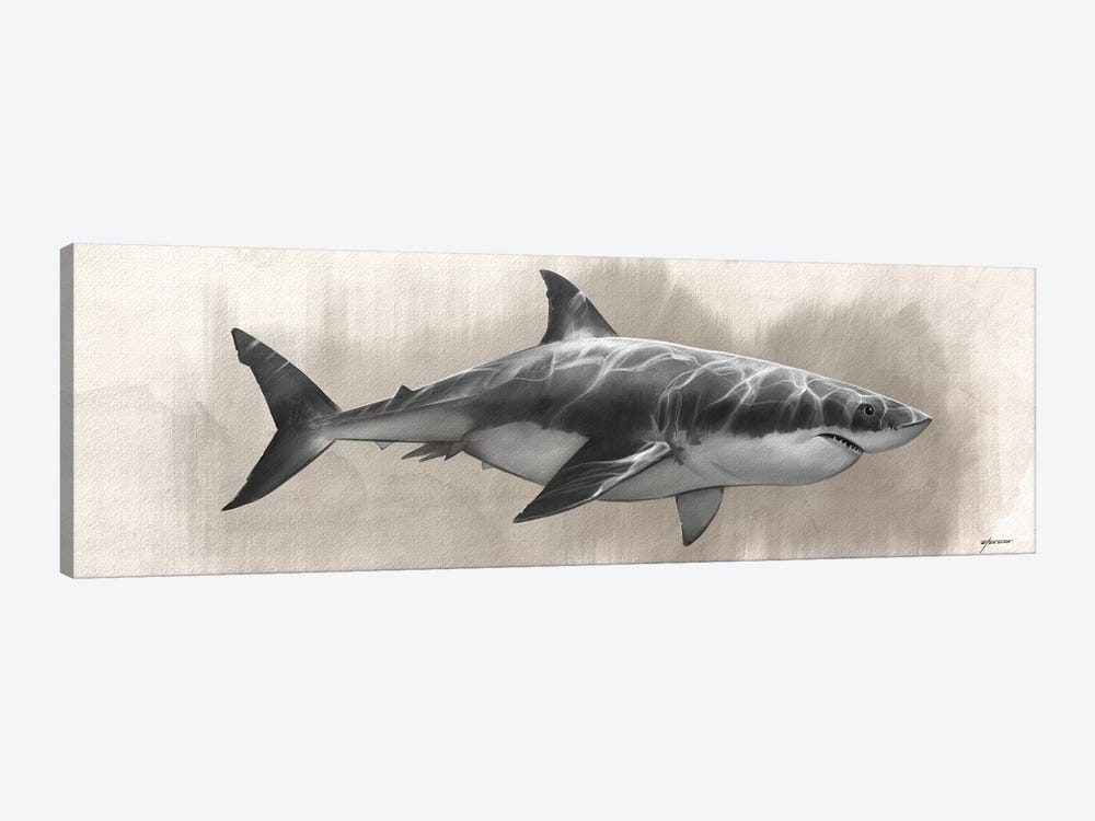 Great White Shark Drawing by Steve Goad 1-piece Canvas Art