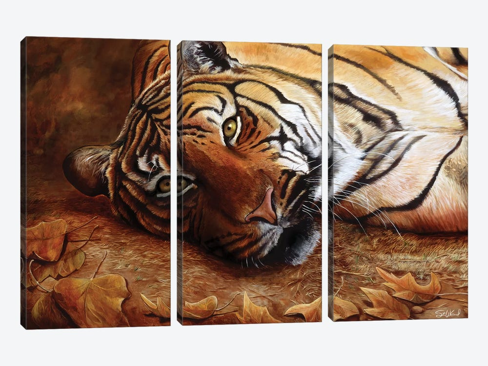 Bengal Tiger by Steve Goad 3-piece Canvas Print