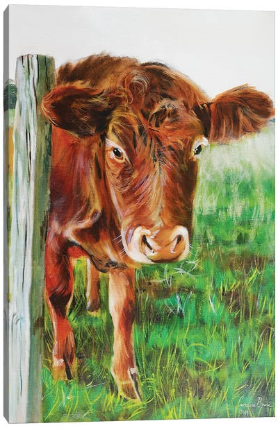 Brown Cow Canvas Art Print