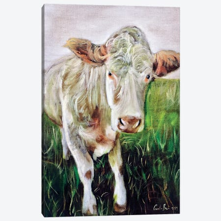 White Cow Canvas Print #GOB69} by Gordon Bruce Canvas Art Print