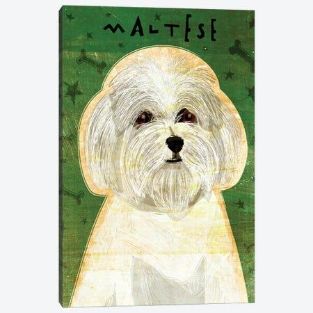 Maltese Canvas Print #GOL162} by John Golden Canvas Art Print