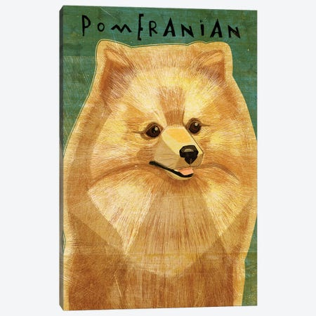 Pomeranian Canvas Print #GOL205} by John Golden Canvas Print