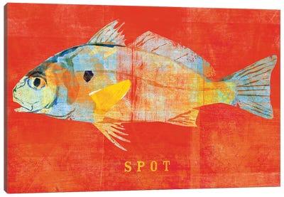 Spot Canvas Art Print