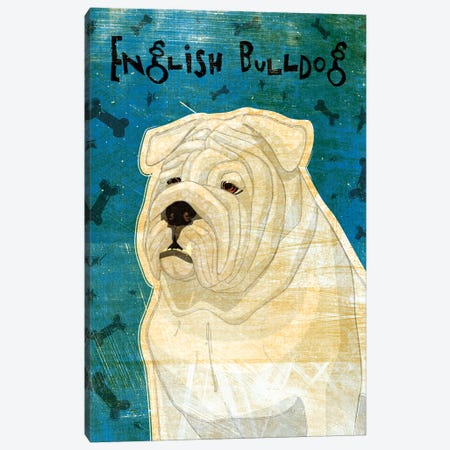 English Bulldog - White Canvas Print #GOL75} by John Golden Art Print