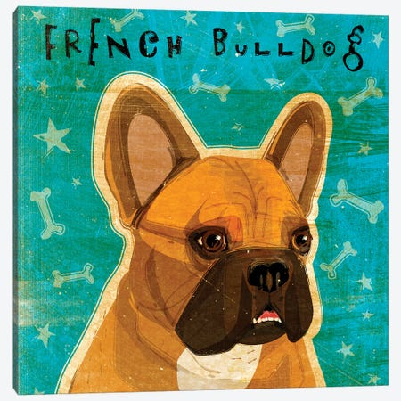 French Bulldog - Fawn & White Canvas Print #GOL93} by John Golden Canvas Art