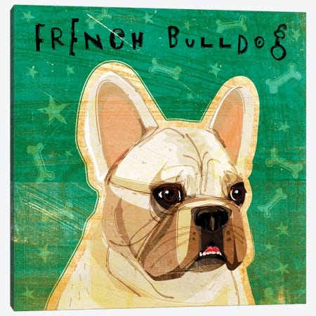 French Bulldog - White Canvas Print #GOL94} by John Golden Canvas Art Print