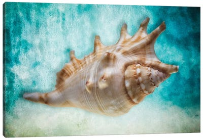 Aquatic Dreams I Canvas Art Print