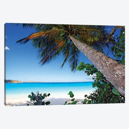 Low Angle View of a Leaning Palm Tree on a Tropical Beach, Trunk Bay Neach, St John, USVI Canvas Print #GOZ119} by George Oze Canvas Art Print