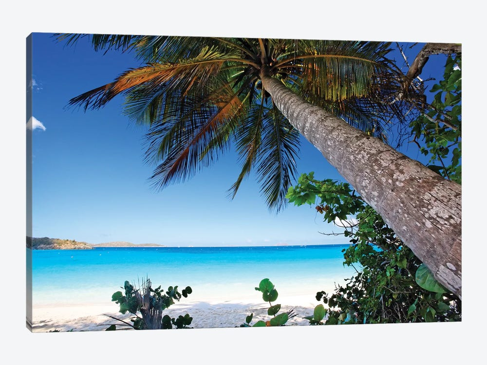 Low Angle View of a Leaning Palm Tree on a Tropical Beach, Trunk Bay Neach, St John, USVI by George Oze 1-piece Canvas Art