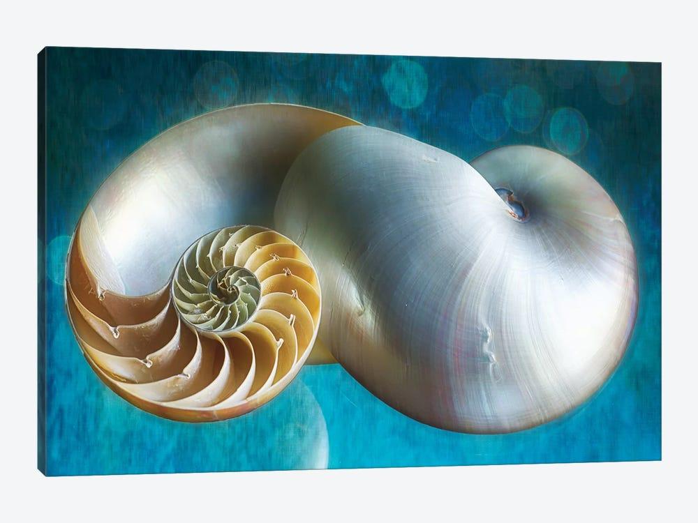 Aquatic Dreams II by George Oze 1-piece Art Print