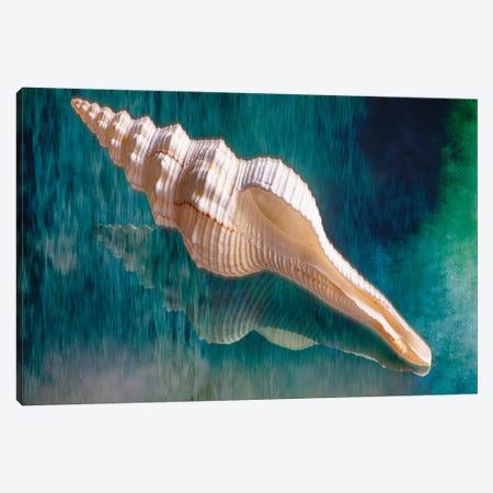 Aquatic Dreams III 3-Piece Canvas #GOZ12} by George Oze Canvas Art