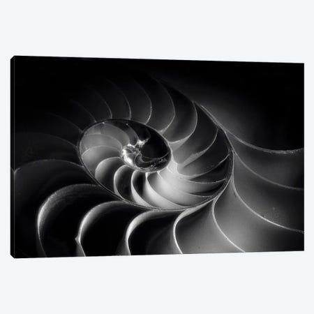 Nautilus Spiral 3-Piece Canvas #GOZ131} by George Oze Canvas Print