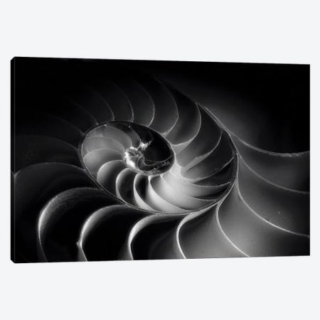 Nautilus Spiral Canvas Print #GOZ131} by George Oze Canvas Print