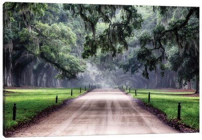 Oak Trees Branching Over a Country Road, Avenue of Oaks, Boone Hall Plantation, Mt Pleasant, South Carolina Canvas Art Print