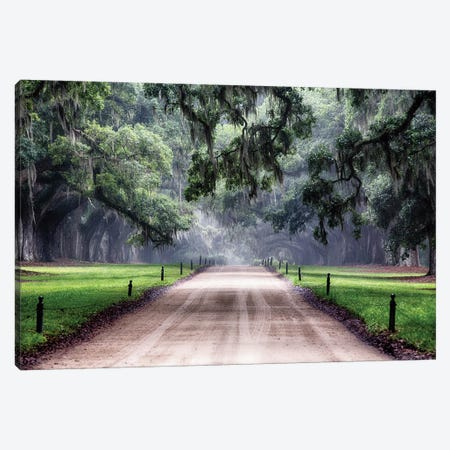 Oak Trees Branching Over a Country Road, Avenue of Oaks, Boone Hall Plantation, Mt Pleasant, South Carolina 3-Piece Canvas #GOZ132} by George Oze Canvas Print