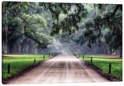 Oak Trees Branching Over a Country Road, Avenue of Oaks, Boone Hall Plantation, Mt Pleasant, South Carolina Canvas Art Print