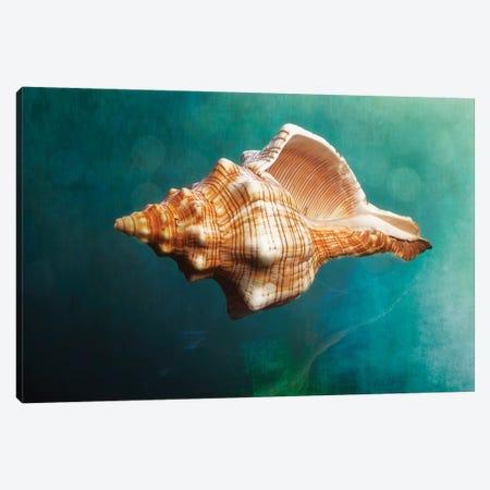 Aquatic Dreams V Canvas Print #GOZ14} by George Oze Canvas Art Print