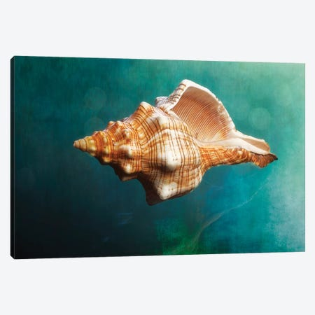 Aquatic Dreams V Canvas Print #GOZ14} by George Oze Canvas Art Print