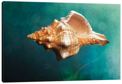 Aquatic Dreams V Canvas Art Print
