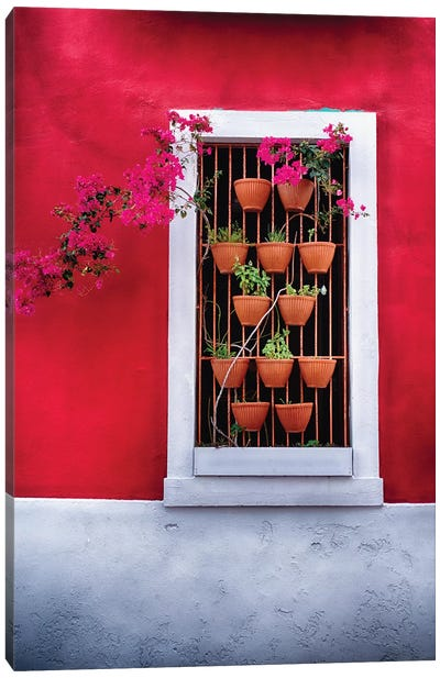 Potted Flowers in a Window Canvas Art Print