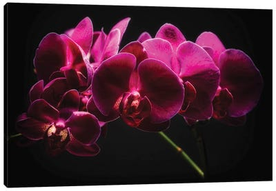 Purple Orchids with Painted Light Canvas Art Print