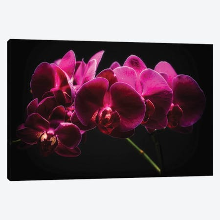 Purple Orchids with Painted Light Canvas Print #GOZ156} by George Oze Canvas Artwork