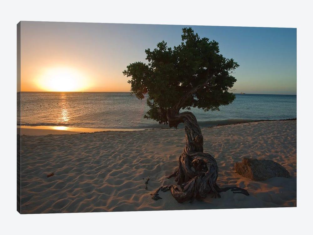 Beach Sunset with a Fofoti Tree, Aruba, Dutch Antilles by George Oze 1-piece Canvas Art Print