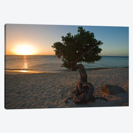 Beach Sunset with a Fofoti Tree, Aruba, Dutch Antilles Canvas Print #GOZ15} by George Oze Canvas Print