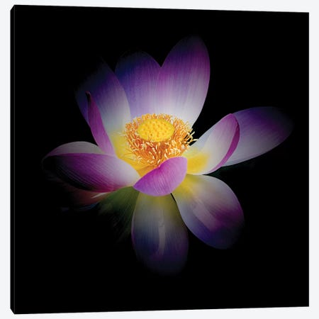 Rebirth of a Luminous Lotus Canvas Print #GOZ162} by George Oze Canvas Artwork