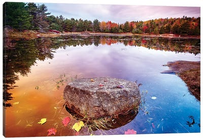 Rock with Fallen Leaves in a Pond, Acadia National Park, Mt Desert Island, Maine Canvas Art Print