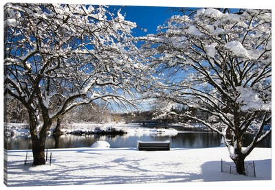 Snow Covered Trees, Winter Scenic, South Branch of Raritan River, Clinton, New Jersey Canvas Art Print