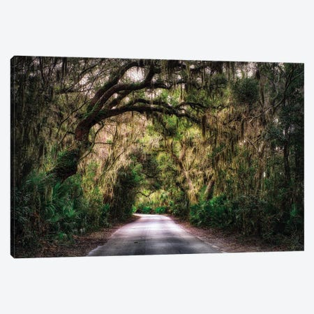 Southern Plantation Road Canvas Print #GOZ188} by George Oze Canvas Wall Art