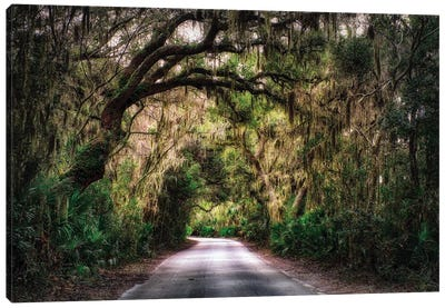 Southern Plantation Road Canvas Art Print