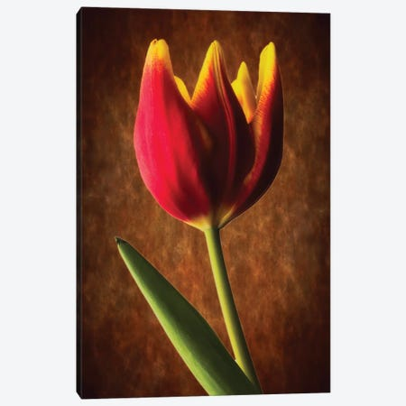 Tulip Glow Canvas Print #GOZ209} by George Oze Art Print