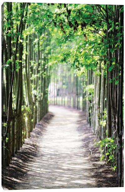 Walking Path in the Woods, New Jersey Canvas Art Print