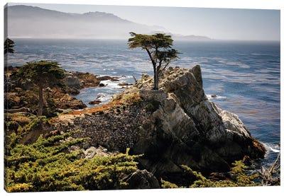 Lone Cypress Tree Canvas Art Print
