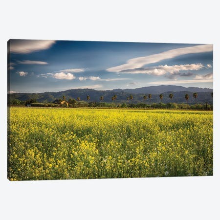Napa Valley Spring Vista With Blooming Yellow Mustard Canvas Print #GOZ267} by George Oze Canvas Artwork