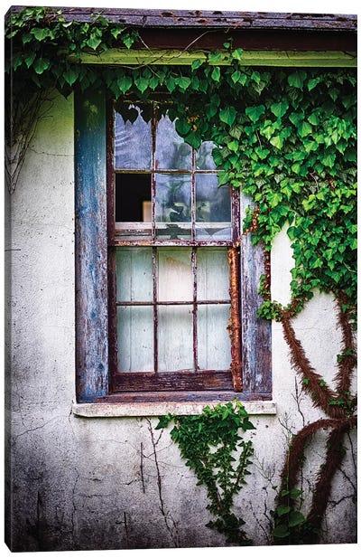 Old Weatherworn Window Overgrown With Ivy Canvas Art Print