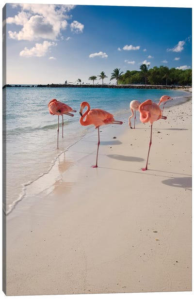 Caribbean Beach with Pink Flamingos, Aruba Canvas Art Print