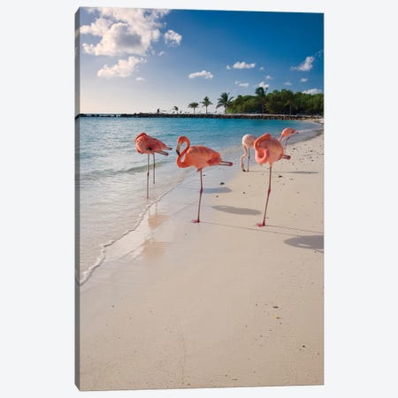 Caribbean Beach with Pink Flamingos, Aruba Canvas Print #GOZ27} by George Oze Canvas Art