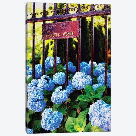 Blue Hydrangea , Bellevue Avenue, Newport, Rhode Island Canvas Print #GOZ314} by George Oze Canvas Art