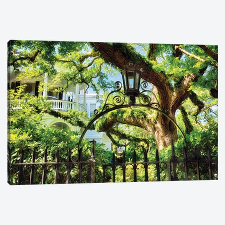 Giant Ivy Covered Oak Tree, Historic District, Charleston, South Carolina Canvas Print #GOZ323} by George Oze Canvas Art