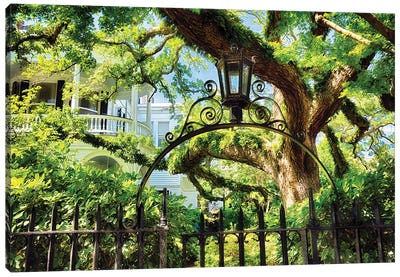 Giant Ivy Covered Oak Tree, Historic District, Charleston, South Carolina Canvas Art Print