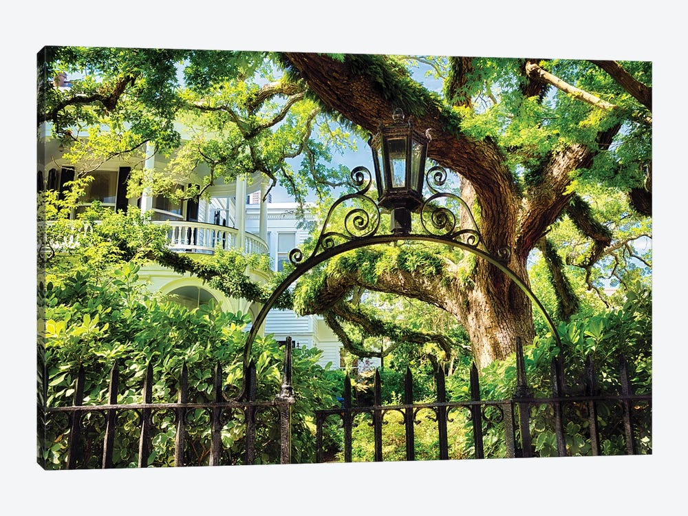 Giant Ivy Covered Oak Tree, Historic District, Charleston, South Carolina by George Oze 1-piece Canvas Wall Art