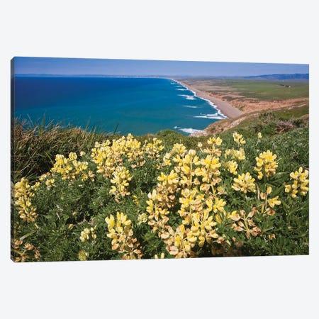 Point Reyes Shoreline At Springtime California Canvas Print #GOZ332} by George Oze Art Print