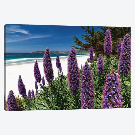 Wildflowers Blooming Along The Pacific Beach, Carmel-By The Sea Canvas Print #GOZ373} by George Oze Canvas Art Print