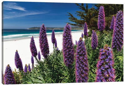 Wildflowers Blooming Along The Pacific Beach, Carmel-By The Sea Canvas Art Print