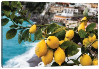 Close Up View of a Lemon Tree with Fruit, Positano, Amalfi Coast, Campania, Italy Canvas Art Print